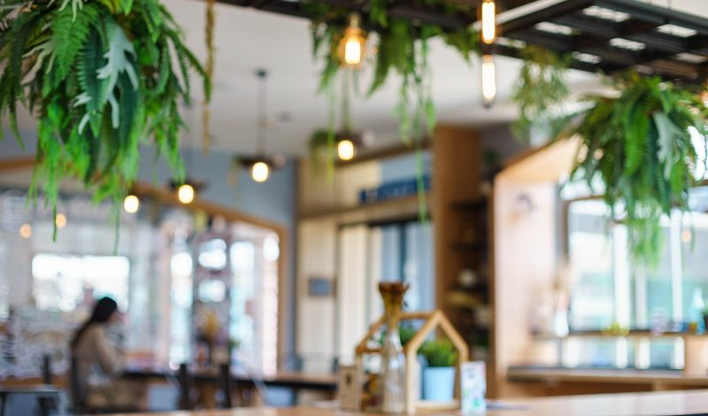 Biophilic design interiors with hanging plants