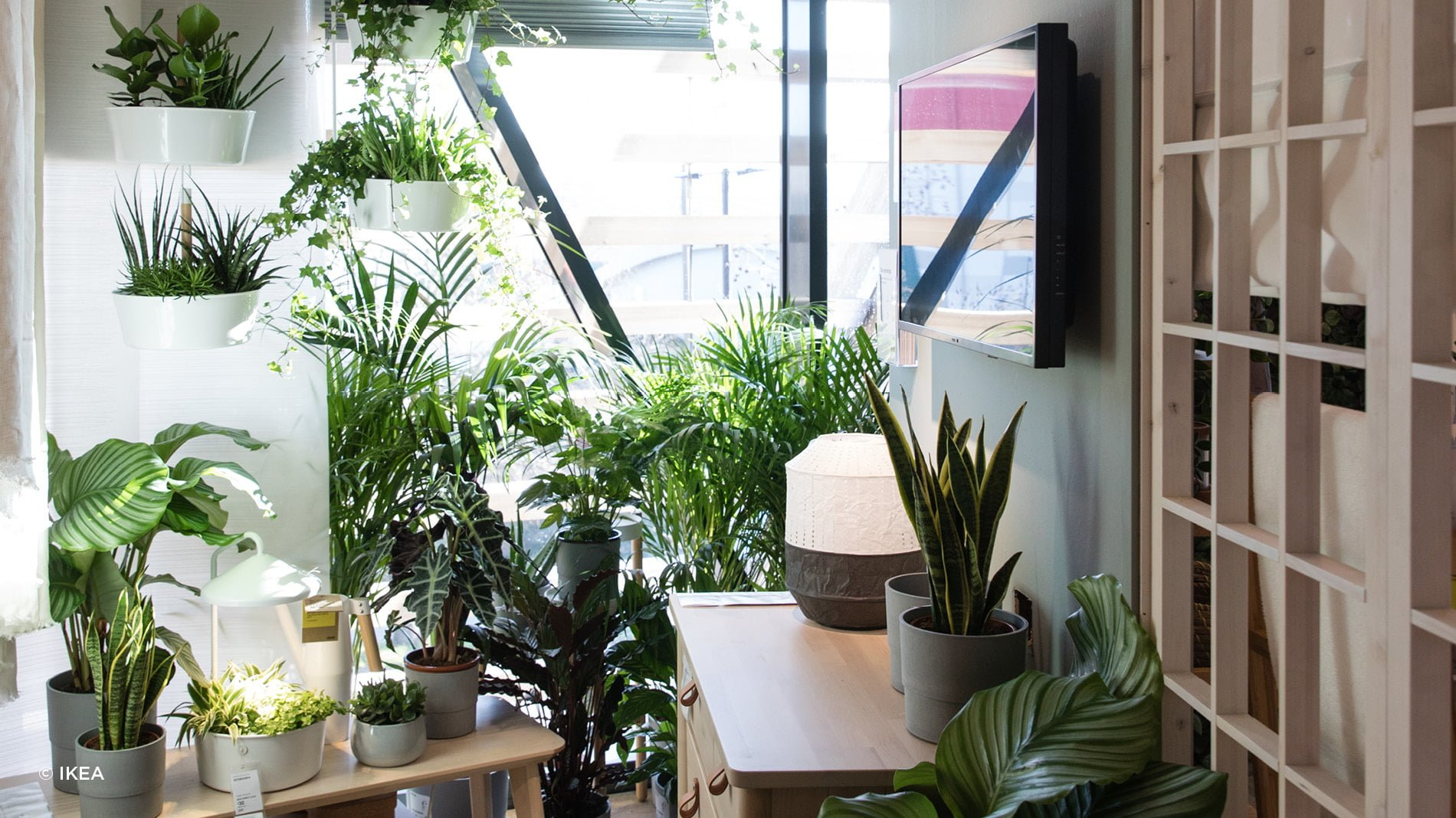 House plants in the IKEA Greenwich store, IKEA's most sustainable store in the UK